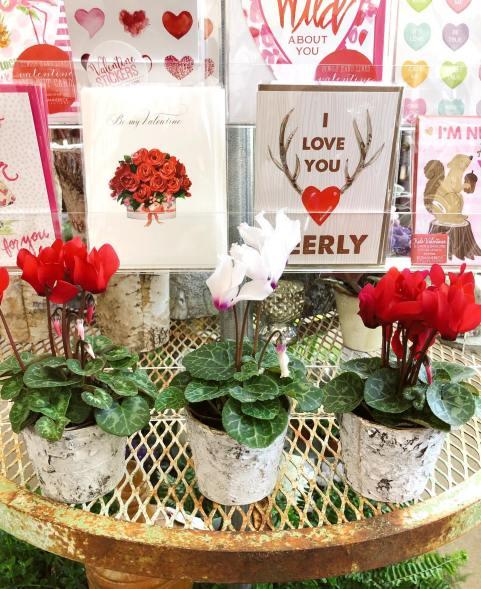 English Daisy Valentine - 2