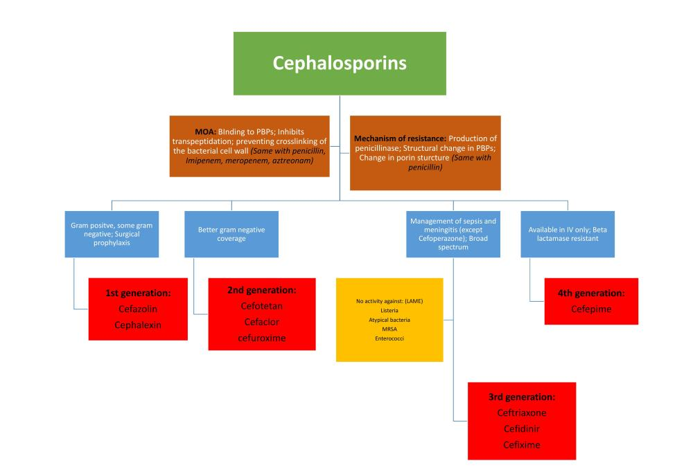 Cell wall inhibitor Antibiotic Flowchart (2/3)