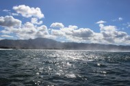 Whale Watching 32