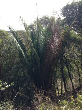 Large Plant