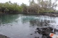 The pool facing inland.