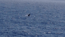 The baby whale! It was so small (only a few tons). There were tons of them.