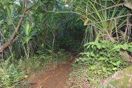 Hanakapi'ai Falls Trail 37