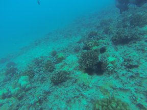 Nautilus Reef 20