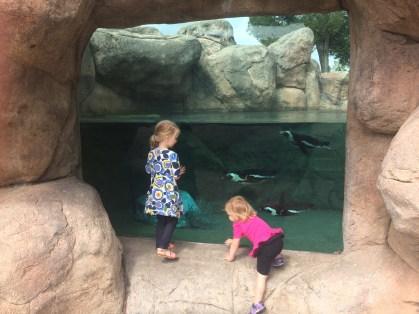 NEW Zoo Adventure Park - penguins swimming