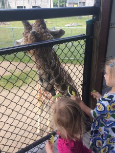$1 to feed the giraffes