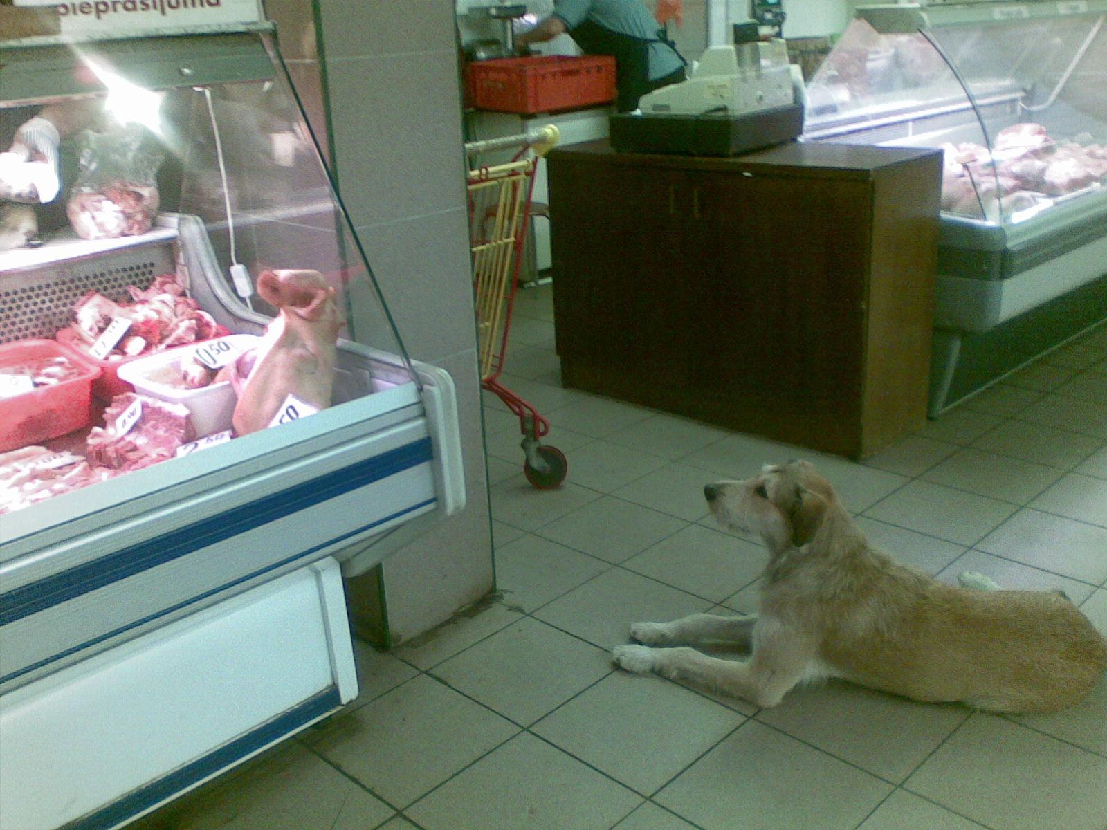 suns un viņa sapņi