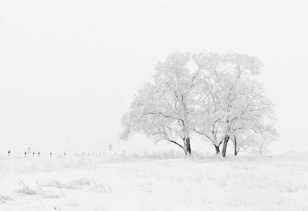 why photo of gray snow