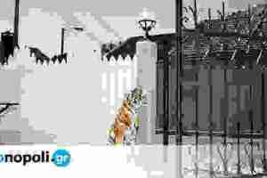 Η Μπιενάλε Θεσσαλονίκης προτείνει «μια κούπα κεράσια»...
