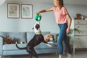 10 προβλήματα συμπεριφοράς του σκύλου και πώς να τα λύσουμε - Shape.gr