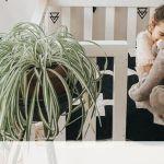 Φυτά εσωτερικά χώρου κατάλληλα για το βρεφικό δωμάτιο και όχι μόνο