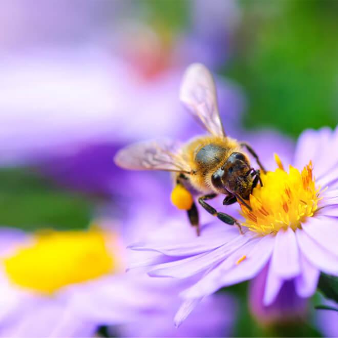 Τσίμπημα μέλισσας ή σφήκας: Πώς θα το αποφύγεις και οι πρώτες βοήθειες - Shape.gr