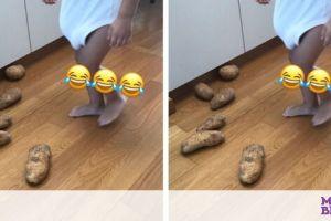 Ελληνίδα μαμά έψαχνε τις πατάτες - Δείτε πού τις έκρυψε ο γιος της
