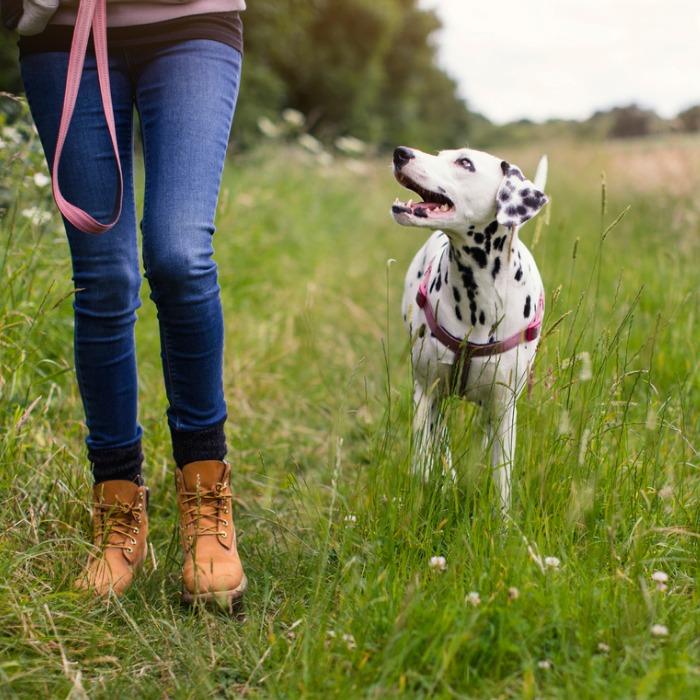 Βόλτα σκύλου: 5 συμβουλές για έναν ασφαλή περίπατο - Shape.gr
