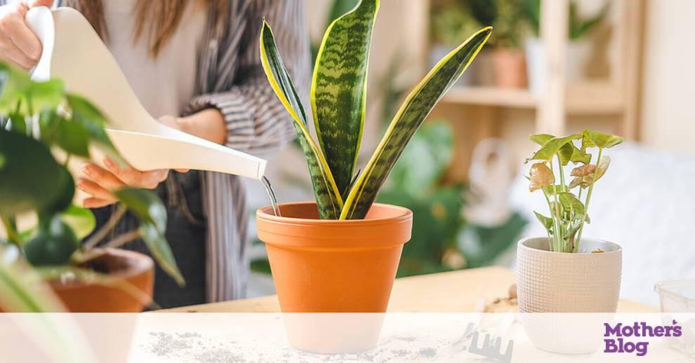 Πότισμα φυτών στις διακοπές: Πέντε αυτοσχέδιες και πρακτικές λύσεις