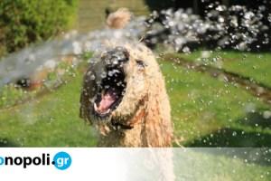 6 τρόποι για να κρατήσετε τον σκύλο σας δροσερό αυτό το καλοκαίρι - Monopoli.gr