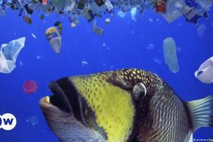 Ελληνική έρευνα: Πως τα πλαστικά φτάνουν στη Μεσόγειο   DW   06.10.2021