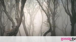 10 στοιχειωμένα δάση σε όλο τον κόσμο που αγνοούσες ότι υπάρχουν