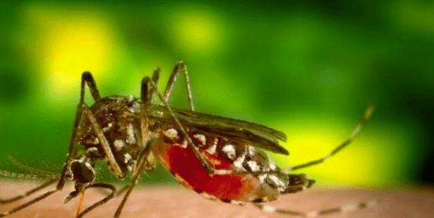 Как да се избавим от комарите