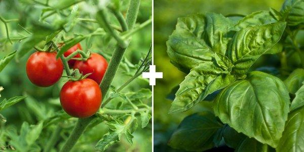 За добра реколта спазете тези правила за съседство на зеленчуците