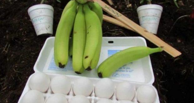 Зарових едно яйце и банан в двора… Резултатът задължително ще ви накара да пробвате и вие!