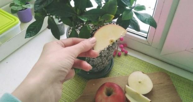 Взех 1 парче ябълка и го пъхнах в саксията спасих цветето