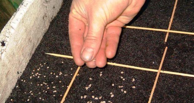 Как правилно и в какво да накиснете семената от домати за да поникне разсадът по-бързо?