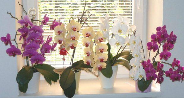9 правила за грижа за орхидеята благодарение на които ще цъфти буйно през цялата година!