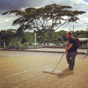 John rakes the beans at Doka Estate Coffee Plantation