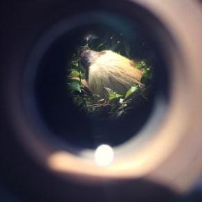 Sloth Cam!