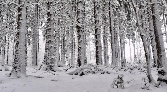 Tipp & Pause: Eindrucksvolle Bäume