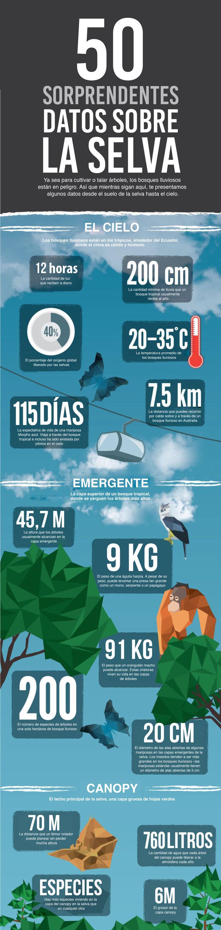 50 sorprendentes datos sobre la selva que te impactarán