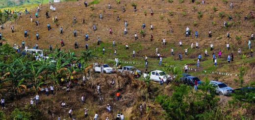Plantación de Árboles en Filipinas