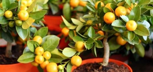 ¿Árboles frutales en macetas? Te contamos cómo tenerlos en el balcón de tu departamento.