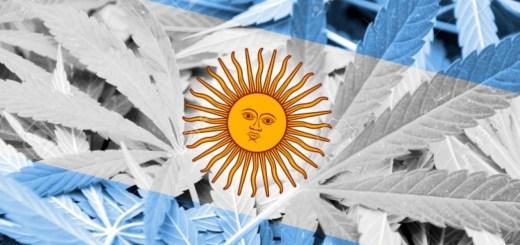 En qué consiste la ley argentina del cannabis medicinal.