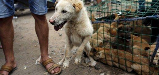 Taiwán prohibe tanto la venta como el consumo de carne de perro y gato