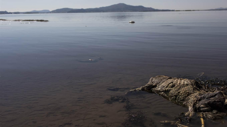 Lago Titicaca contaminado, especies muertas