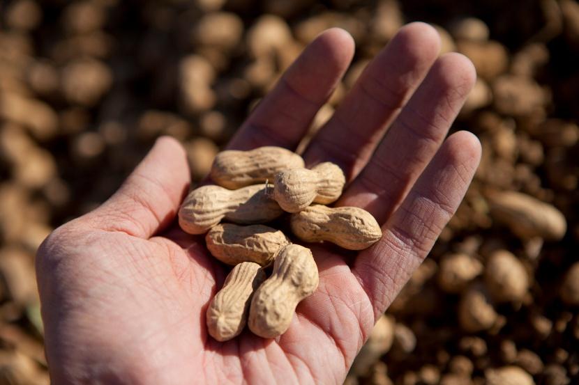El comer embarazo en de cacahuates beneficios