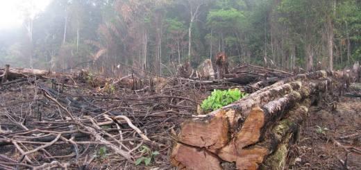 Amazonas deforestado, el nivel más alto en 10 años