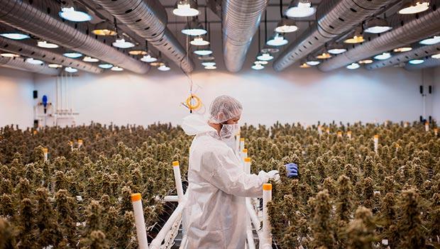 Industria del Cannabis en el mundo