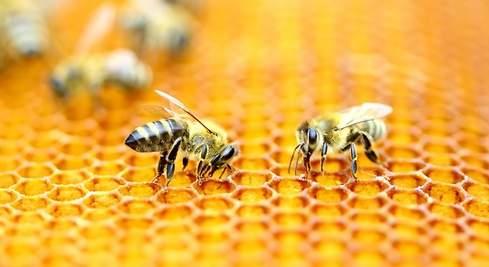 Salvar a las abejas es crucial para la salud del planeta.