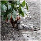 Eichhörnchen – Ostern in Planten un Blomen. Hamburg – 365tageasatzaday