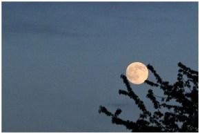 Mond im Baum – 365tageasatzaday
