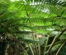 Jardin_des_plantes_4.jpg