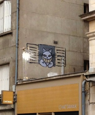 yellow_cats_dijon_france.jpg