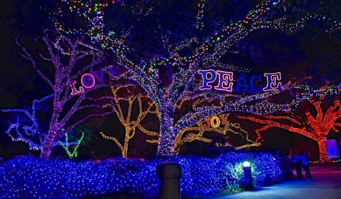 Zoo Lights Houston 2017 365