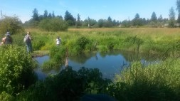 More of the pond.