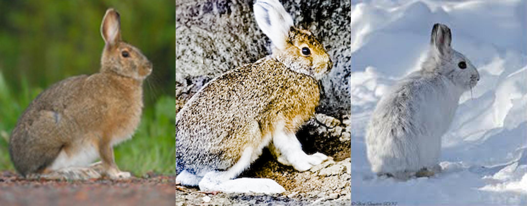 Biodiversity And Adaptations