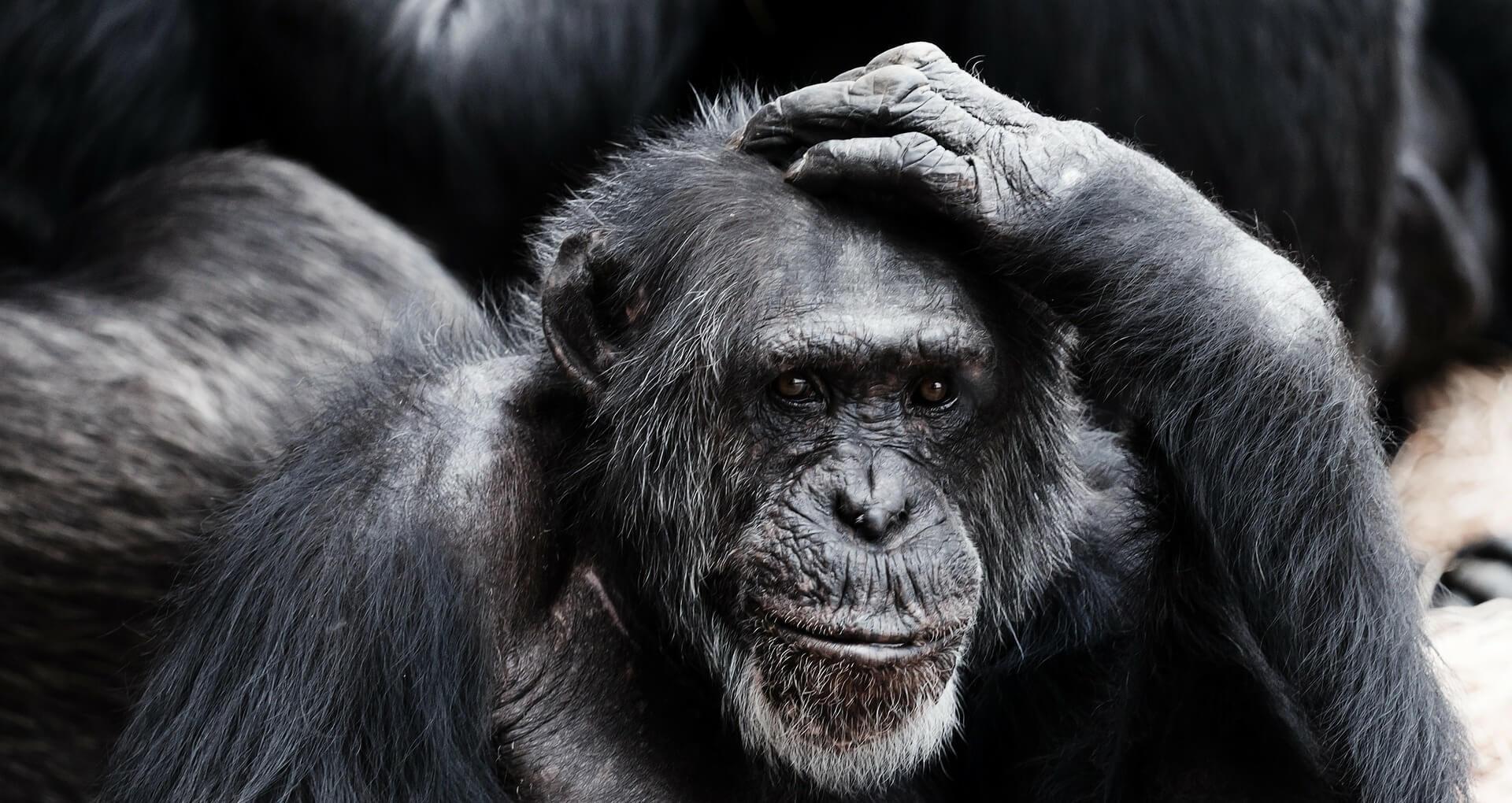L'essere umano è carnivoro o erbivoro?