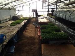 育苗用ハウスでは土壌実験や夏野菜の育苗、ベビーリーフの栽培など